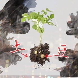 Character TuDou - Potato