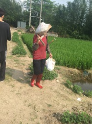 InternChina - Rice Farm