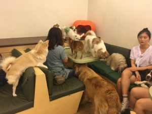 InternChina- Dog Cafe