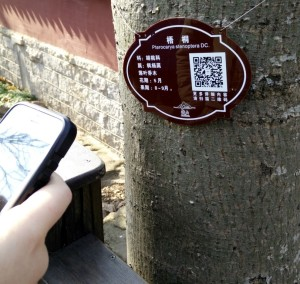 InternChina- QR codes on the trees