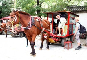 InternChina-Renting-a-horse-and-carriage-in-Qufu