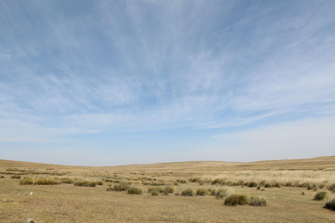 InternChina - the green'ish Desert
