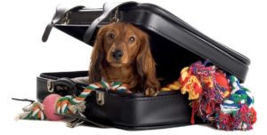 InternChina- Unfortunately you can't pack the dog!