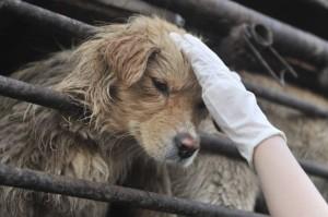 InternChina - chinese animal rescue