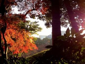 InternChina - beautiful Garden in Japan InternChina - beautiful Garden in Japan