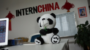 Picture of a panda in the InternChina office in Chengdu